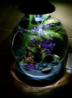 Beta Fish Aquarium with Waterfall! $39 at Amazon. I want to buy this for Baylee..