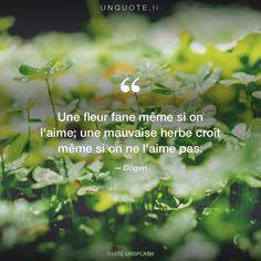 """Dōgen """"Une fleur fane même si on l'aime; une mauvaise herbe croît même si on ne l'aime pas."""""""
