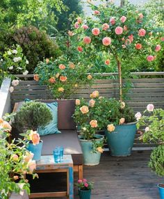 Growing roses in containers (balcony, patio and terrace) small balcony garden, rooftop Backyard Hammock, Backyard Patio, Backyard Landscaping, Landscaping Ideas, Diy Patio, Small Balcony Garden, Terrace Garden, Balcony Gardening, Balcony Planters