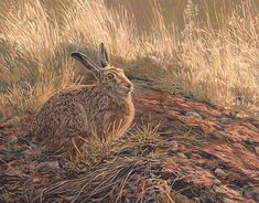 Brown Hare Study - Original Oil Painting by Martin Ridley