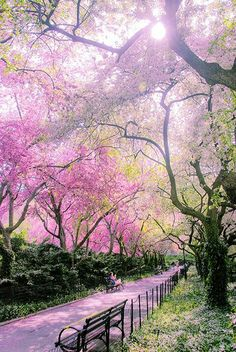 Spring in the Conservatory garden, Central Park, New York