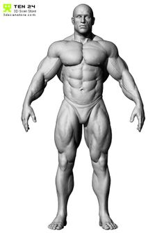 8 best t pose images on pinterest anatomy reference sculptures