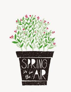 ola-bemvinda-primavera-chegou-flores-vaso