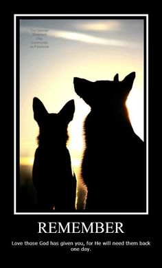 The German Shepherd Dog Dog Quotes, Animal Quotes, Friend Quotes, Life Quotes, I Love Dogs, Cute Dogs, Funny Dogs, Rottweiler, Animals And Pets