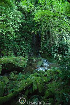 Atlantic rainforest, Serra dos Orgaos National Park,   Teresopolis, Rio de Janeiro state, Brazil