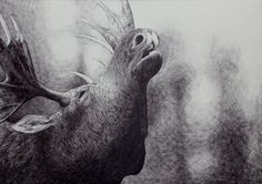 Elg by Morten Løfberg #kunst #kunstner #maleri #tegning - Beauton Art Gallery - http://beautonart.com | http://beautonart.dk