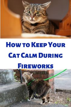 How to Keep Your Cat Calm During Fireworks Hearing Sounds, Calming Cat, Survival Instinct, Cat Sitter, Scared Cat, Orange Tabby Cats, Outdoor Cats, Alternative Therapies