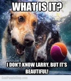 """Friend Mode: """"What is it? I don't know Larry, but it's BEAUTIFUL!! ~ Dog Shaming shame - Ball Dogs they are!"""