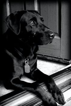 This was soooo Beau......Distinguished looking, laying at the door way, but never crossed the line.
