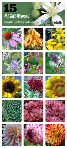 15 Fab Fall Flowers | curated by 'Sensible Gardening and Living' blog!