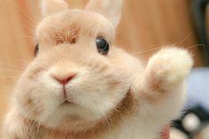 Cute Little Animals, Cute Funny Animals, Cute Dogs, Funny Dogs, Cute Baby Bunnies, Cute Babies, Hunny Bunny, Fluffy Animals, Animals And Pets
