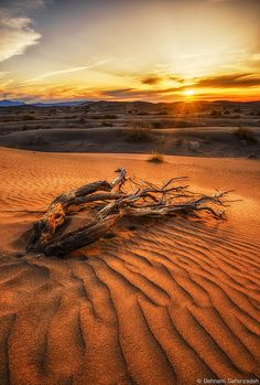 """wowtastic-nature: """" The life of a tree in the desert on 500px by Behnam Safarzadeh, Tehran, Iran ☀ NIKON D600-f/22-24mm-iso100, 649✱960px-rating:99.4 ◉ Photo location: Google Maps """""""