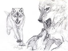 Wolf Fight sketch by *silvercrossfox on deviantART