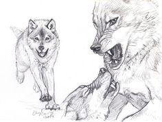Wolf Fight sketch by silvercrossfox