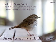 Look at the birds of the air; they do not sow or reap or store away in barns, and yet your heavenly Father feeds them. Are you not much more valuable than they?    Matthew 6:26
