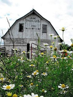 Field Of Daisies By Old Barn. My two favorite things, Daisies & Old Barns! Farm Barn, Old Farm, Country Barns, Country Living, Country Life, Country Roads, Country Charm, Barn Pictures, Time Pictures