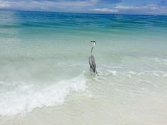 Lido Beach, Waves, Bird, Animals, Outdoor, Outdoors, Animales, Animaux, Birds