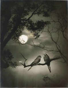 """Chin-san Long. """"Picture in the painting, painting in the picture"""": firsttimeuser — LiveJournal Moon Photos, Moon Pictures, Beautiful Moon, Beautiful Birds, Nocturne, Luna Moon, Shoot The Moon, Moon Shadow, Good Night Moon"""