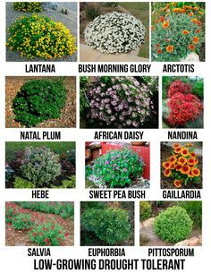 Gardens Discover Creative Landscape Ideas with Big Impact - front yard landscaping ideas with rocks Garden Shrubs Landscaping Plants Planting Shrubs Luxury Landscaping Landscaping Company Garden Soil Bushes And Shrubs Landscaping Melbourne Garden Beds Creative Landscape, Landscape Designs, Landscape Plans, Fantasy Landscape, Hawaii Landscape, Landscape Borders, Landscape Timbers, Flower Landscape, Landscape Photos