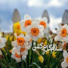 السلام على ربيع الايام .. ابا صالح…