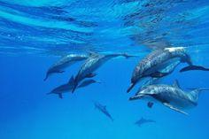 Fermando de Noronha  Golfinhos  Maravilhas da Natureza