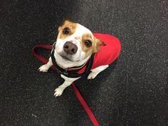 Jep came prepared today in his @ruffwear rain coat  #dogsofinstagram #petsofinstagram #dogs #rainyday #OOTD