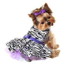 Wild Zebra  Dog Dress