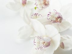 # Orchids Flowers Buds Orchid Images, Flower Images, Flower Pictures, Purple Orchids, White Orchids, Purple Flowers, Hd Flowers, Beautiful Flowers, Beautiful Images
