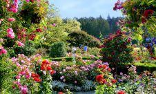 Butchart Gardens - Vancouver Island, BC