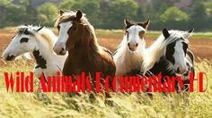 Horses Discovery in American Wild Animals Documentary HD