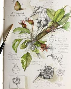 Spring two years ago . many things happen in two years and people's lives can change radically. Plant Painting, Plant Drawing, Plant Art, Nature Illustration, Botanical Illustration, Botanical Drawings, Botanical Art, Gcse Art Sketchbook, Drawing Journal