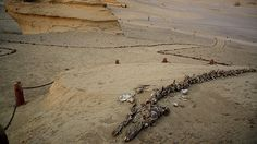 El insólito 'Valle de las Ballenas': Restos de los primeros cetáceos yacen en un desierto