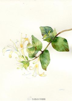温泽WARMMARSH的照片 - 微相册 Plants Watercolor, Botanical Art, Animals, Abstract Watercolor, Animales, Animaux, Animal, Animais, Dieren