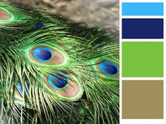 peacock! love this palette