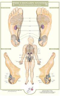 Reiki, Foot Chart, Visual Dictionary, Reflexology Massage, Chakra System, Eating Well, Yoga, Chakras, Natural Health