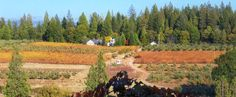 3000 North Canyon Road Camino, CA (530) 621-3740 Season: Opens Mid-September Apples: Mid-September - Mid-November You-Pick Apples. Open for Blueberry picking in Mid-June. http://www.sunmountainfarm.com/