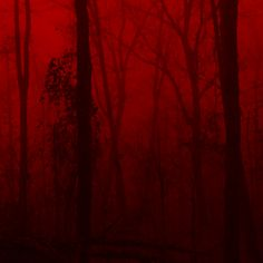 red is my favorite color Red Aesthetic Grunge, Aesthetic Colors, Aesthetic Photo, Aesthetic Pictures, Dark Red Wallpaper, I See Red, Arte Obscura, Rainbow Aesthetic, Red Walls
