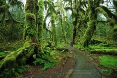 Hall of Mosses Trail, Olympic National Park, Washington State