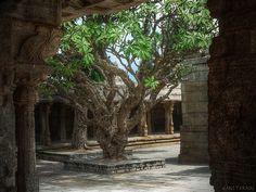 Temple tree at Lepakshi, Karnataka
