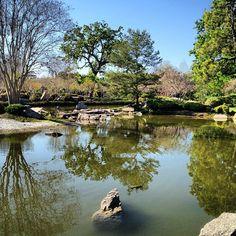 Japanese garden in Houston, TX Houston Livestock Show, Showing Livestock, Houston Tx, Rodeo, Texas, Japanese, City, Garden, Animals