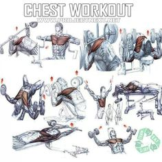 Bench Press Workout For Beginners.Health And Fitness Benefits Of Weight Training. Workout Plan For Womens Weight Loss Body Care. A Beginner's Guide To The Bench Press Planet Fitness. Best Chest Workout, Chest Workouts, Fun Workouts, Chest Exercises, Shoulder Exercises, Muscle Fitness, Mens Fitness, Health Fitness, Bench Press Workout