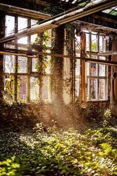 Overgrown room with windows photo by Denny Müller ( on Unsplash Post Apocalypse, Ikea France, Underwater Ruins, Timothy Green, Ruined City, Temple Ruins, Castle Ruins, Ancient Ruins, Landscape Pictures