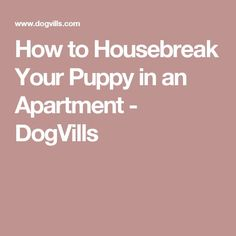 How to Housebreak Your Puppy in an Apartment - DogVills
