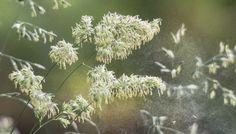 Onlinehilfe bei Allergien: Von Pollen-App bis Pollentagebuch - Hilfe bei Allergien – | ||| | || CODECHECK.INFO