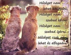 Word 2, Labrador, Motivational Quotes, Best Friends, Life Quotes, Humor, Dogs, Minden, Tao