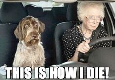 What pets think when grandma gets behind the wheel.