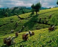 Sri Lanka, next trip ??