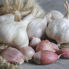 Italian Late garlic is an artichoke garlic that has a full, rich flavor and is also very long-lasting and stores very well. Growing Vegetables At Home, Growing Tomatoes, Easy To Grow Bulbs, Garlic Festival, Types Of Potatoes, Ornamental Cabbage, Potato Bag, Growing Mushrooms, Home Landscaping