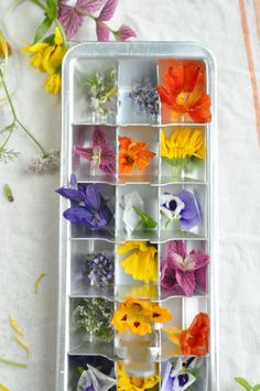 Edible Flower Ice Edible Flowers, Ice Cube Trays, Matcha, Latte, Smoothies, Bubbles, Projects, Food, Recipes