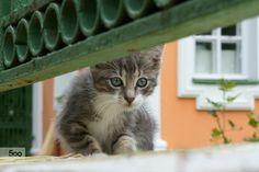 Cat in Kuskovo by Kirill Mot on 500px